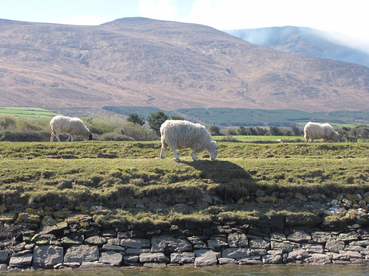 Paysage Irlande 2